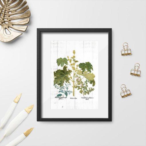 Plakat z motywem ziół i ich kwiatów
