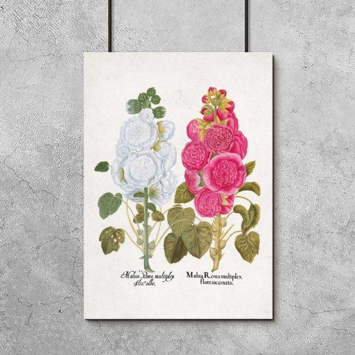 Plakat z roślinami dekoracyjnymi