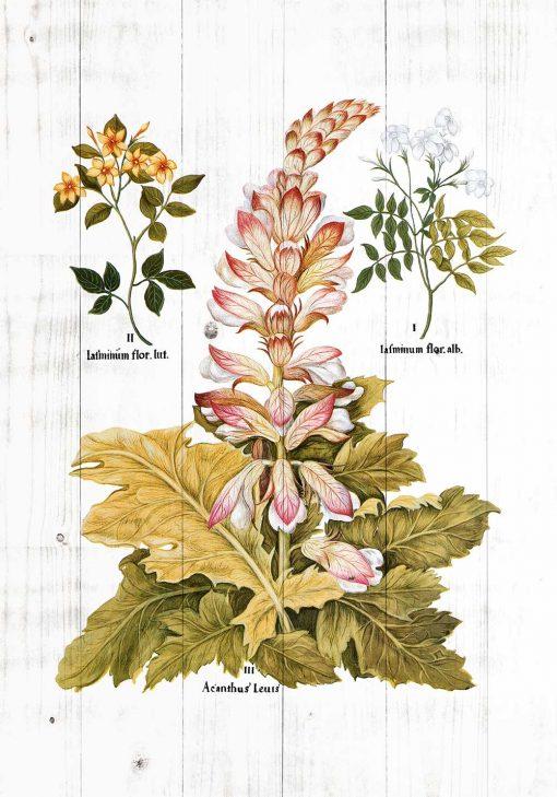 Plakat z roślinami do powieszenia w aptece