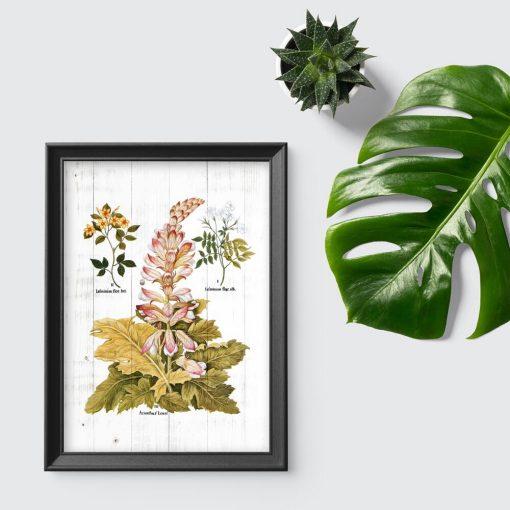Plakat z roślinami do powieszenia w szkole