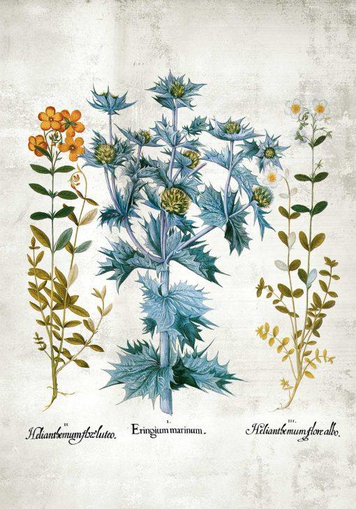 Plakat z roślinami i kwiatuszkami