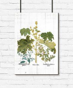 Plakat z roślinami liściastymi i kwiatkami
