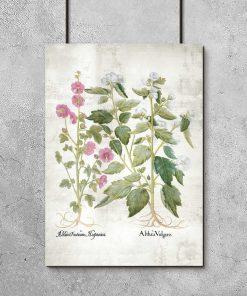 Plakat z różowymi kwiatami malwy