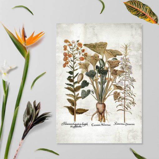 Plakat z rysunkami roślin