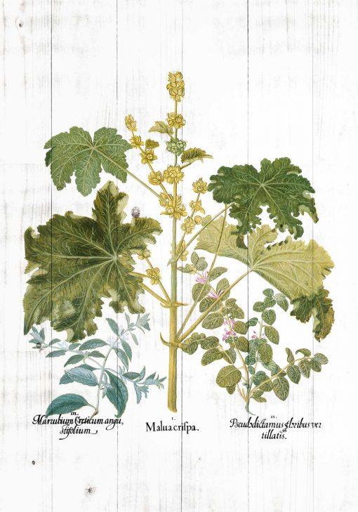 Plakat z zielonymi roślinami i kolorowymi kwiatuszkami