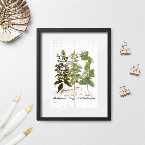 Plakat z ziołami i łacińskimi nazwami na tle desek