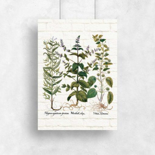 Plakat z ziołami jako pomoc edukacyjna