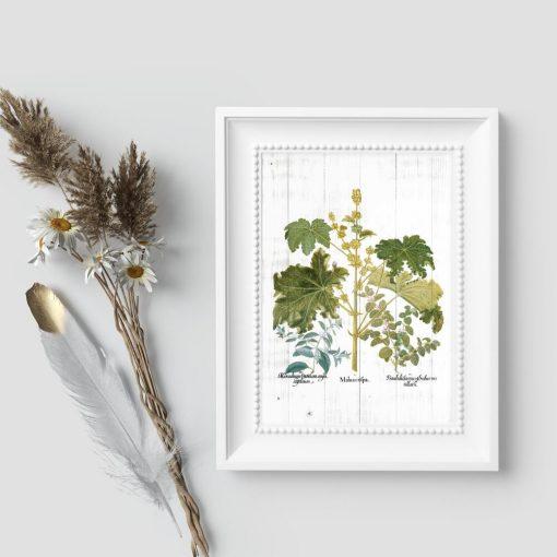 Plakat z ziółkami w porze kwitnienia