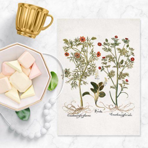 Plakaty z bylinami i nazwami łacińskimi