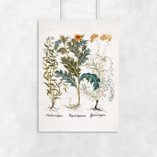 Plakaty z roślinami i nazwami łacińskimi