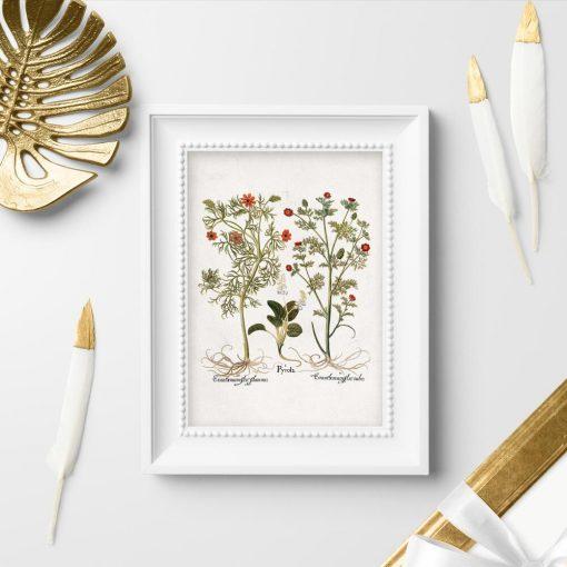 Plakaty z roślinami zielnymi i ich kwiatami