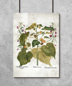 plakat z roślinami